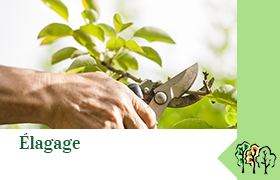 Elagage | paysagiste sur Auffargis
